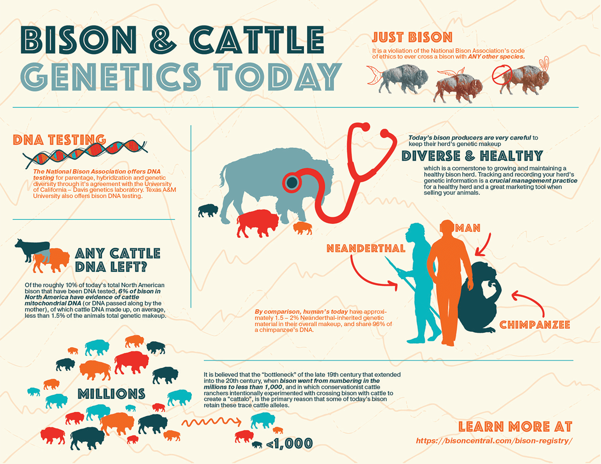 Bison-&-Cattle-Genetics