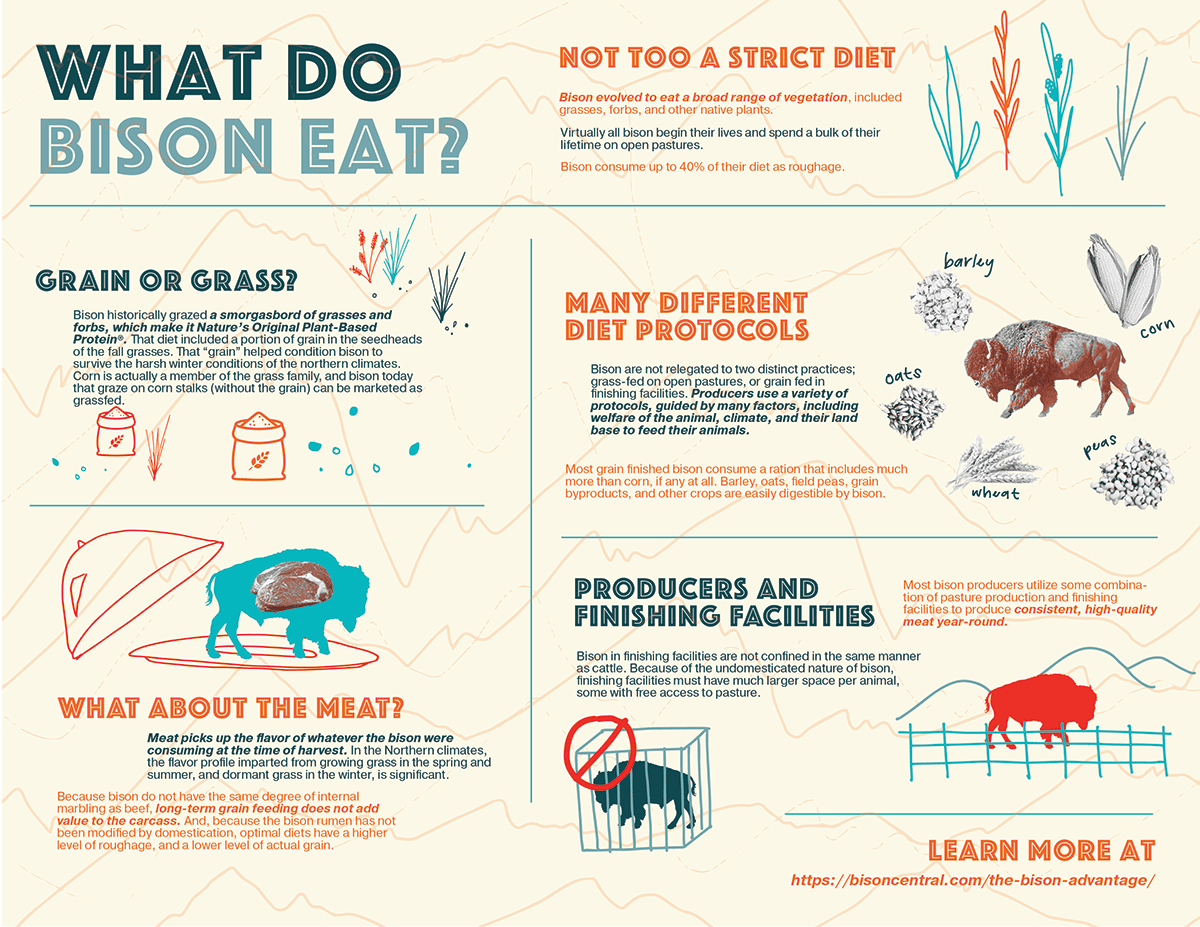 What-Do-Bison-Eat