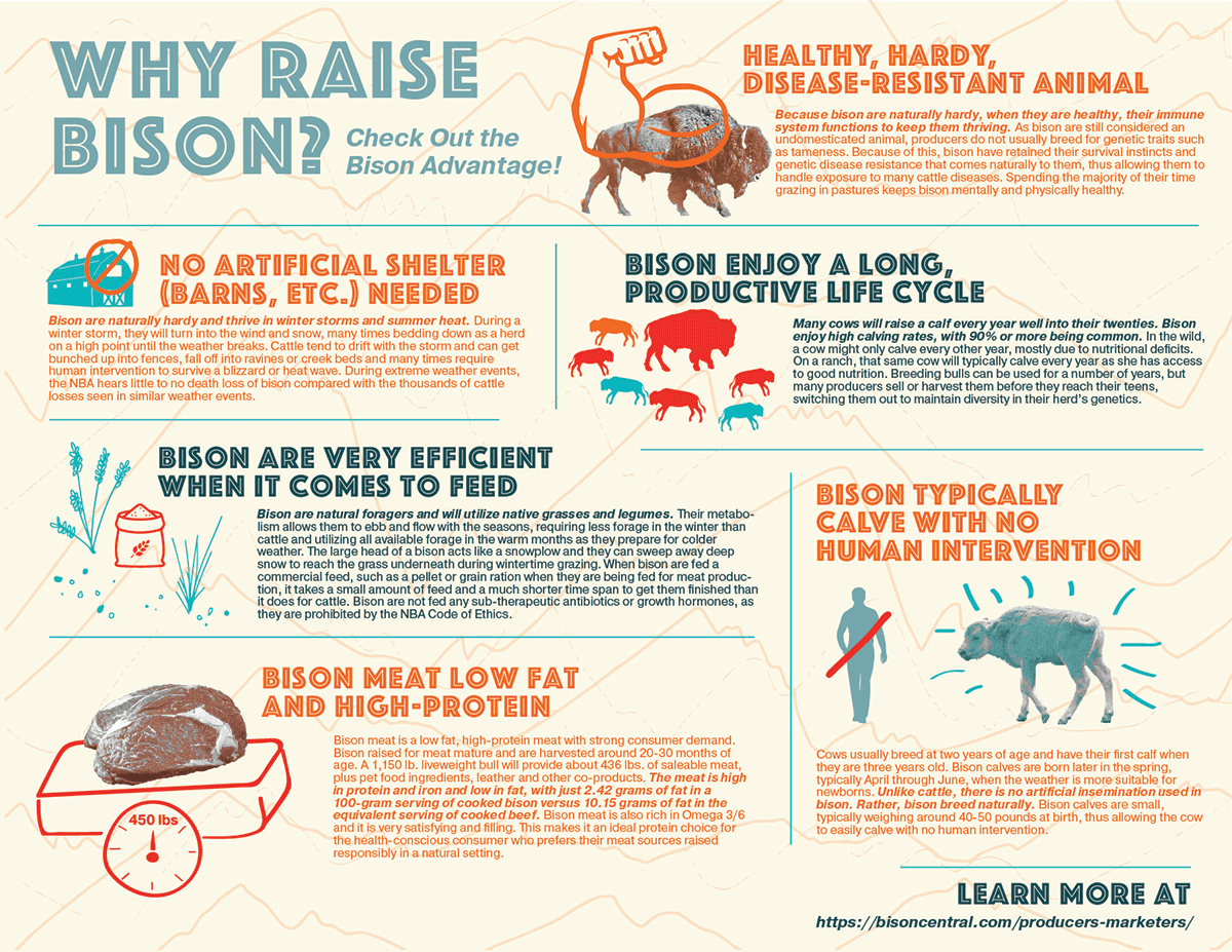 Why-Raise-Bison